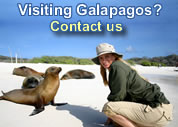 Galapagos tours and cruises