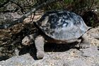 Galapagos Islands wildlife photos, Reptiles