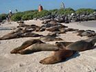 Galapagos tourist attractions & Islands cruises, sea lions