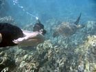 Galapagos snorkeling pictures
