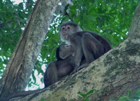 Tropical rain forest animals pictures monkey